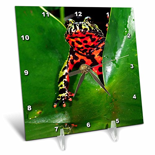 3dRose dc_83808_1 Fire Belly Toad, Native to China-Na02 Dno0112-David Northcott-Desk Clock, 6 by 6-Inch
