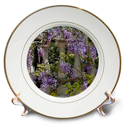 3dRose Danita Delimont - Flowers - Wisteria Growing on Column Fence in Charleston, South Carolina - 8 inch Porcelain Plate (cp_315007_1)