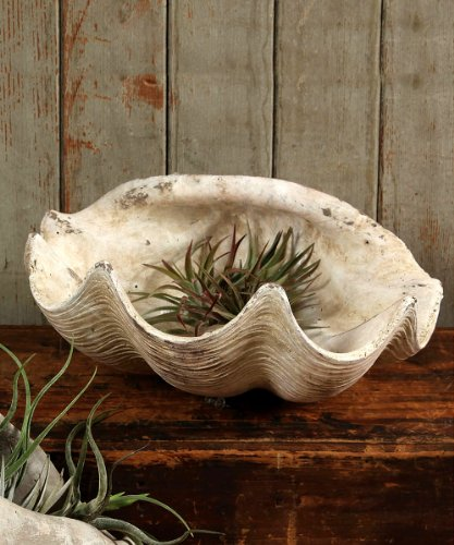 Cement Cast Clam Shell - Antique (Cast Cement)