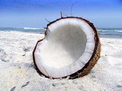 Bahama Coconut Candle/Soap Fragrance Oil 1oz ()