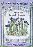 Heirloom Hidcote Blue Lavender Seeds 220 Seeds