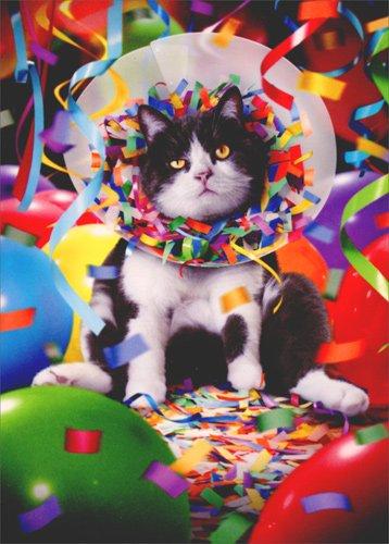 Amazon Cat In Party Cone Avanti Funny Birthday Card Health