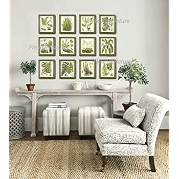 Botanical Set of 12 Prints Unframed Antique Beautiful Ferns Green Forest Nature Home Room Fern Decor Wall Art