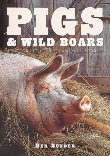 Pigs and Wild Boars ( A Portrait of the Animal World )