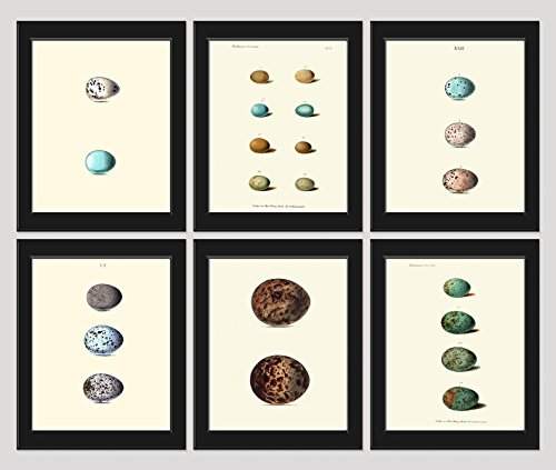 Bird Egg Print SET of 6 Art Print 8X10 Antique Birds Nests Eggs Shell Flowers Plate Illustration Room Wall Home Interior Decor to Frame
