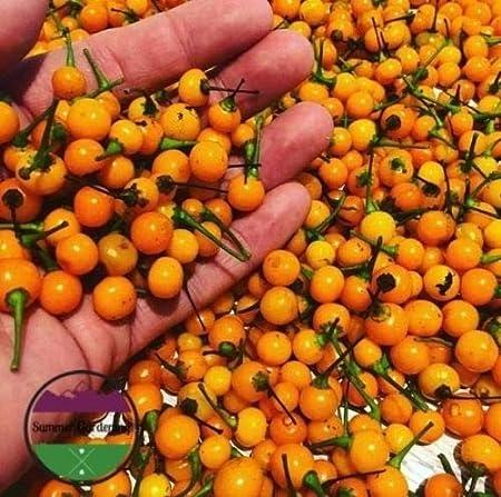 Aji Charapita Hot Pepper Premium Heiloom 25 Seeds Rare