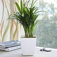 Upto 50% Off: Plants, Planters & Decorative Lightings