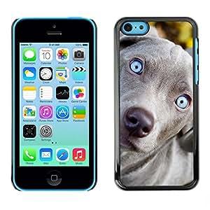 PC/Aluminum Funda Carcasa protectora para Apple Iphone 5C Blue Weimaraner Vizsla Puppy Dog / JUSTGO PHONE PROTECTOR