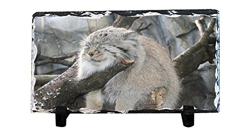 Pallas Cat (Y.H.X New Style Personalized Slate Signs and decorative slates - The perfect spot for a Palla's cat Pallas's Cat slate paintings)