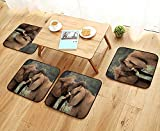 Printsonne Universal Chair Cushions Two Wild Savanna Elephants Wrestling Cute Nature ICS South African Animals Game Personalized Durable W15.5 x L15.5/4PCS Set