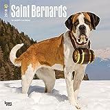 Saint Bernards 2018 12 x 12 Inch Monthly Square Wall Calendar, Animals Dog Breeds (Multilingual Edition)