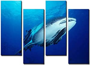 Wocatton Shark Ride symbiotic Relationship Stock Pictures, Royalty Free Wall Art Background Decor Pictures Print On Canvas Art Stretched and Framed Perfect Home Decoration