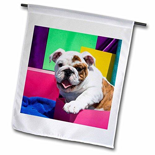 3dRose Danita Delimont - Dogs - Bulldog Puppy sitting in colorful box, MR - 12 x 18 inch Garden Flag (fl_258179_1) (Pomonas Garden)