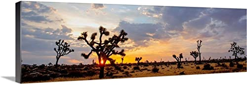 Sunrise at Joshua Tree National Park