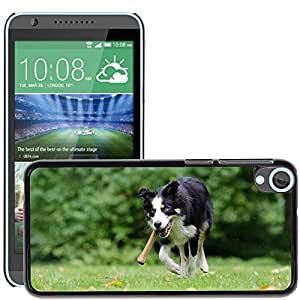 GoGoMobile Etui Housse Coque de Protection Cover Rigide pour // M00118249 Perro del border collie con un hueso // HTC Desire 820