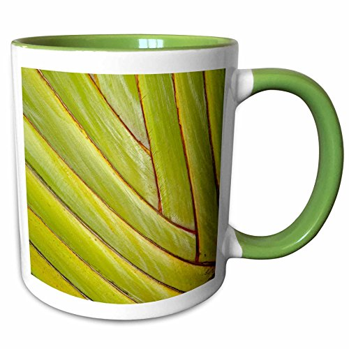 3dRose Danita Delimont - Leaves - Pattern in leaf stems of travelers palm tree, Fort Myers, Florida, USA - 11oz Two-Tone Green Mug - Myers Fort Outlets In