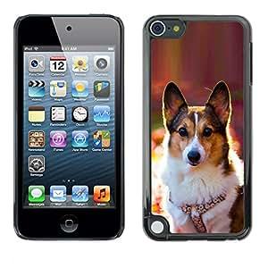 VORTEX ACCESSORY Hard Protective Case Skin Cover - corgi rembroke welsh cardigan dog - Apple iPod Touch 5
