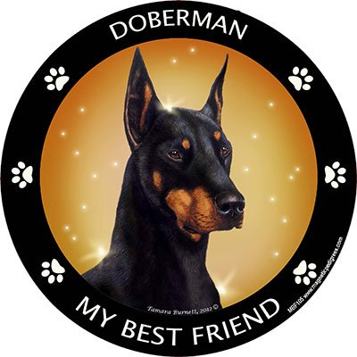 Doberman My Best Friend Magnet ()