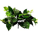 Mikash Green POTHOS Bushes Greenery Fillers for Arrangements Wedding Party Decorations | Model WDDNGDCRTN - 17216 | 40 Pieces