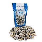 Hermit Crab Shells for Saltwater Aquarium
