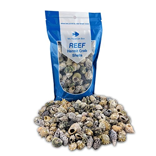 (Hermit Crab Shells for Saltwater Aquarium)