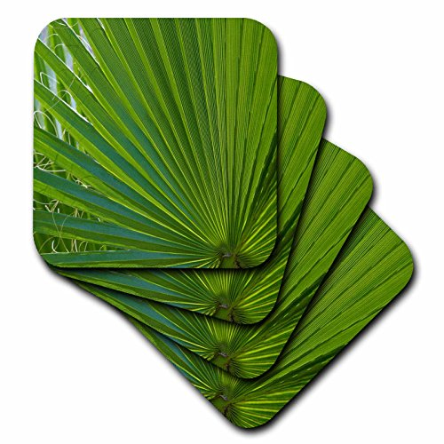 [Danita Delimont - Leaves - Detail, Palm Tree Frond - set of 4 Coasters - Soft (cst_228204_1)] (Palm Frond Placemat)