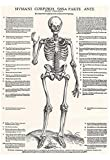 Jost de Negker (Anatomical boards of Jan van Calcar, Sheet 4: Skeleton, Front View) Art Poster Prin 13 x 19in