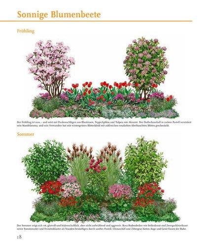 Blumenbeete in meiner Lieblingsfarbe von Januar bis Dezember: Amazon ...
