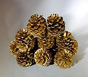 12 Cape Cod Gold Pine Cones Hand Painted All Natural Premium Quality Cones Grown in The Woods Of Cape Cod Decorative Home Decor Bowl Displays Crafting Holiday Christmas Decor
