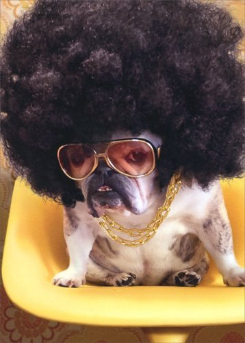 Dog With Afro - Avanti Funny Bulldog Get Well - Brunette Sunglasses