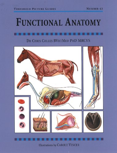 Amazon functional anatomy threshold picture guides ebook functional anatomy threshold picture guides by colles chris fandeluxe Gallery