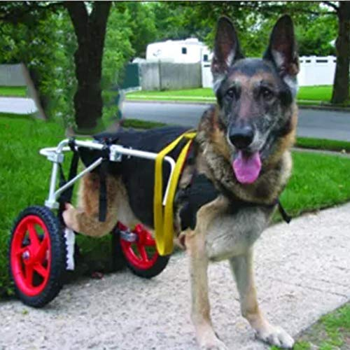 Dog Wheelchair Best Friend Mobility Adjustable Pet Scooter Back Legs Paralyzed Hind Limb Rehabilitation Training,Large(L)