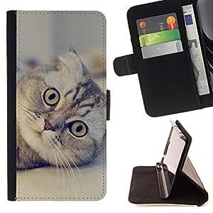 Momo Phone Case / Flip Funda de Cuero Case Cover - Lindo gato Scottish Fold - Apple Iphone 6 PLUS 5.5