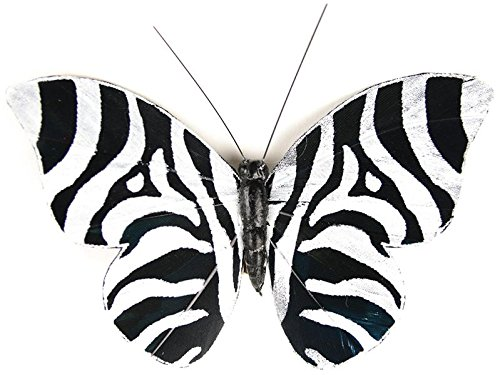 Touch of Nature 1-Piece Feather Butterfly Zebra Print on Clip for Arts and Crafts, 3-Inch, Black/White
