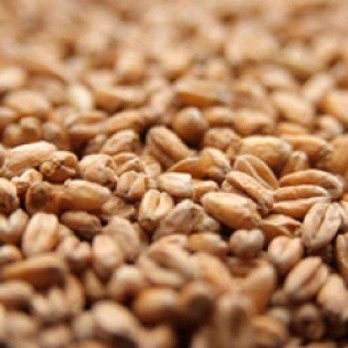 Briess Red Wheat Malt - 10 LB, ()