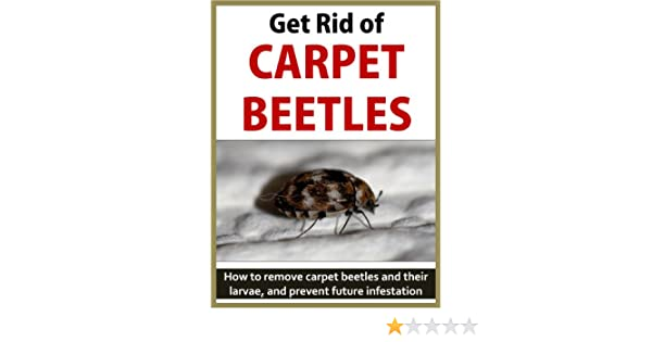 Get Rid of Carpet Beetles  How to remove carpet beetles and their larvae   and prevent future infestation   Kindle edition by Andrew Macarthy. Get Rid of Carpet Beetles  How to remove carpet beetles and their