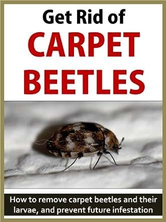 Get Rid of Carpet Beetles: How to remove carpet beetles ...