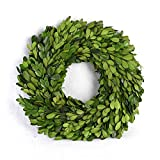 BoxWoodLand Real Boxwood Plant Wreath, Ball, Cone Tree, Wedding Home Decoration, Realistic Full Green Plant, Indoor Décor(Wreath, 12'')