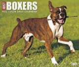 Best Value Just Boxers Daily Desktop Box Calendar Dogs 2017 {jg} Great Holiday Gift Ideas - for mom, dad, sister, brother, grandparents, gay, lgbtq, grandchildren, grandma.
