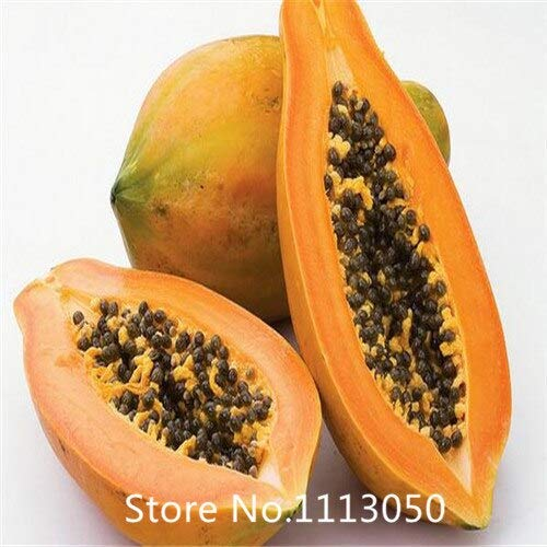 (Black : Garden .Aging Papaya Fruit Seeds, Flowering Quince 10Particles / Pack for Christmas)