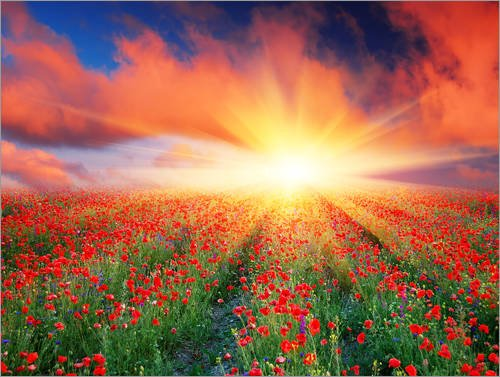 Posterlounge Acrylic print 40 x 30 cm: Sunset over a field of red poppies by Editors Choice