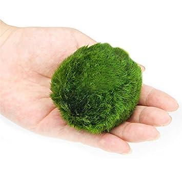 F-eshiat Adornos de acuario verde triángulo musgo plantas acuáticas peceras tanque paisaje marimo camarón Nano Plantas redondas: Amazon.es: Hogar