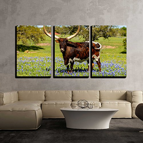 a Beautiful Watusi Longhorn Mix Bull Standing Proud in a Bluebonnet Field x3 Panels