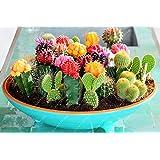 100 pcs mix cactus seeds t Rare succulents plant for home garden decoration