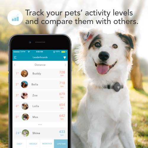 Findster Duo+ Pet Tracker Free of Monthly Fees - GPS Tracking Collar for Dogs and Cats & Pet Activity Monitor by...
