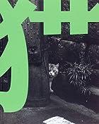 猫―TOKYO WILD CATS 武田花写真集