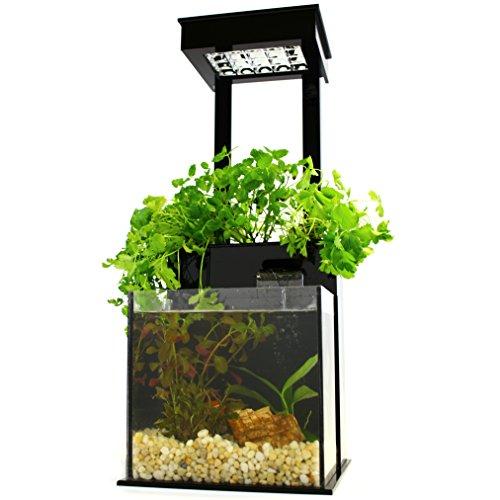 51JBiPF5gAL - Fin to Flower Aquaponic Aquarium Mini System A