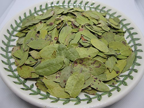 Uva Ursi Leaves - Dried Arctostaphylos Uva-ursi Whole Leaves 100% from Nature (4 oz) by Nature Tea
