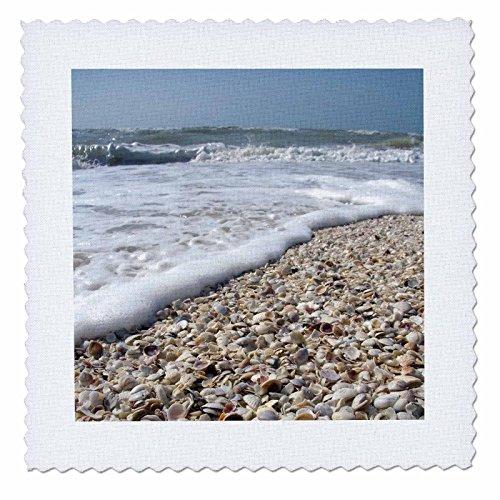 3dRose qs_89073_1 Seashells, Sanibel Island, Gulf Coast, Florida-Us10 Dfr0166-David R. Frazier-Quilt Square, 10 by 10-Inch