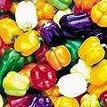 Multi Colours Sweet Pepper Organic Flavor Vegetable Fruit 20 Seeds